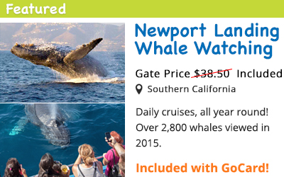 Whale Watching Cruises! Year round daily departures.