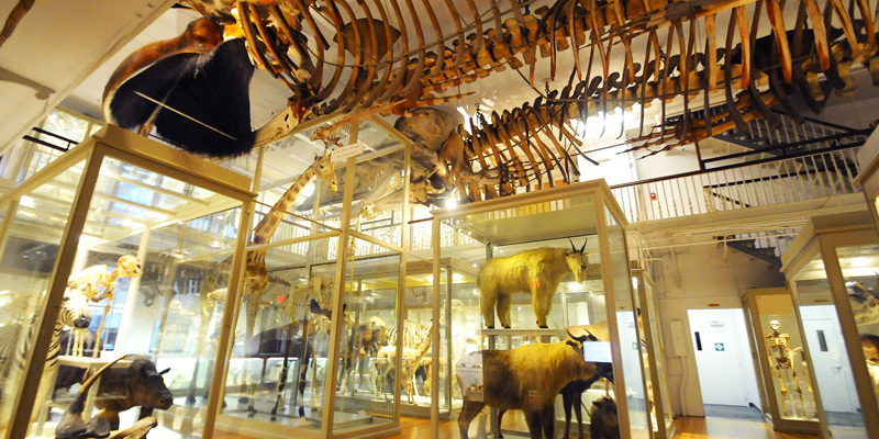Harvard Museum of Natural History 1