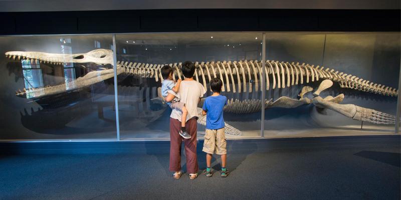 Natural History Museum New York Pass