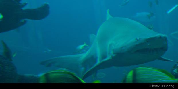 New england aquarium discounts save 20 guaranteed New england aquarium tickets