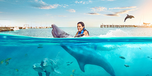 Dolphin Discoverys Royal Swim VIP Plus 1