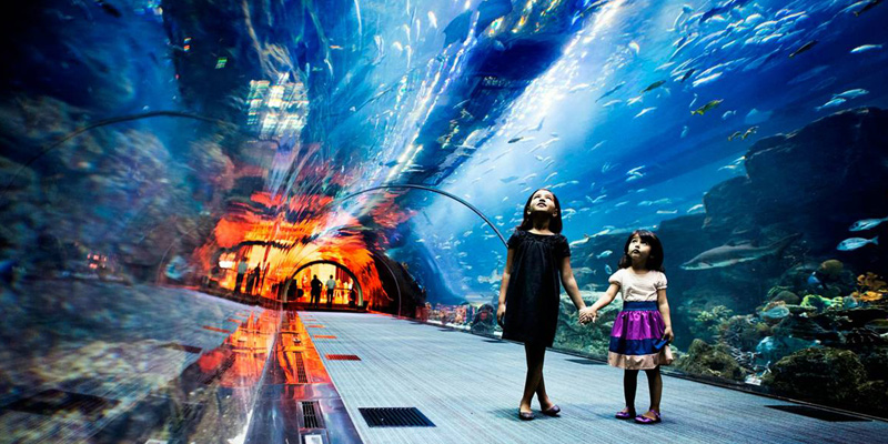 Dubai Aquarium and Underwater Zoo 1
