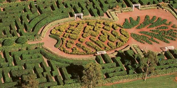 dole plantation maze go select oahu