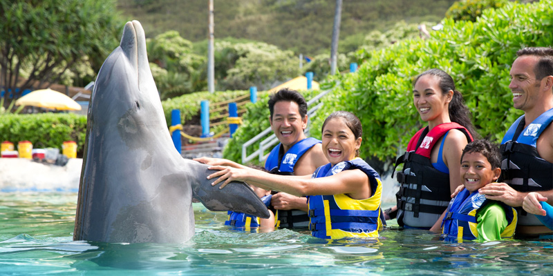 Dolphin Encounter by Sea Life Park 2