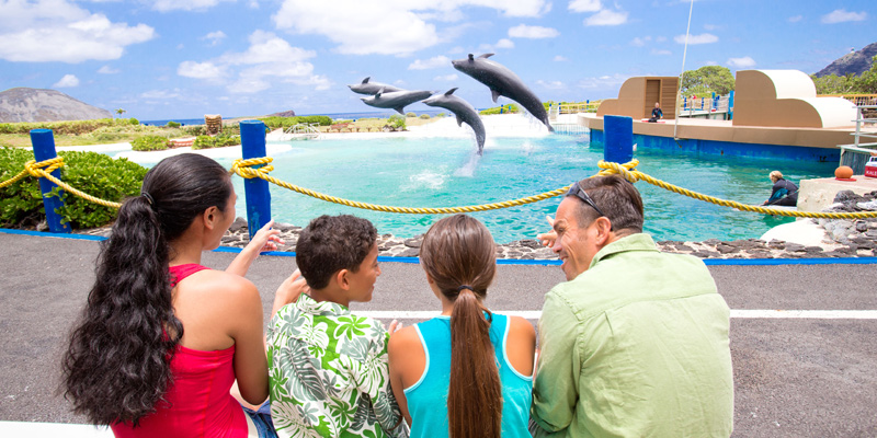 Dolphin Encounter by Sea Life Park 3