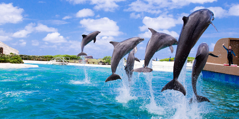 Sea Life Park by Dolphin Discovery 2