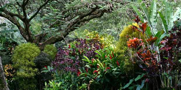 Waimea Valley 4