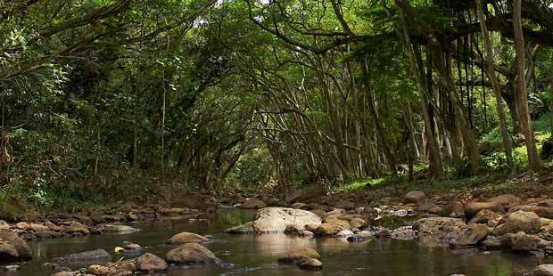 Waimea Valley 5