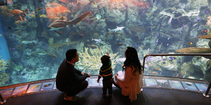 Aquarium Of The Pacific Tickets Save Up To 50 Off