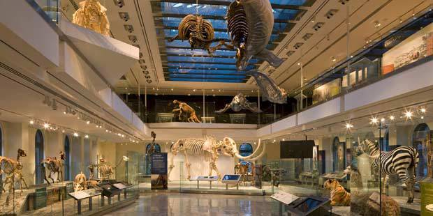 LA County Natural History Museum 3
