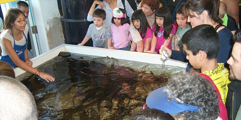 Santa Monica Pier Aquarium Discounts Save Up To 20 Off
