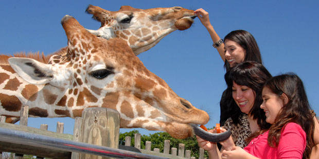 SF Miami Zoo Safari Package 1