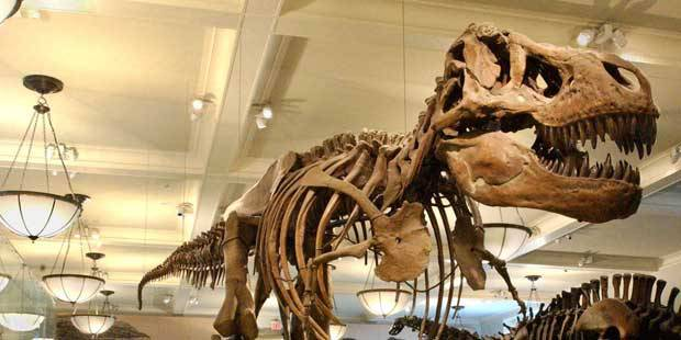 American Museum Of Natural History Discounts Save Up To
