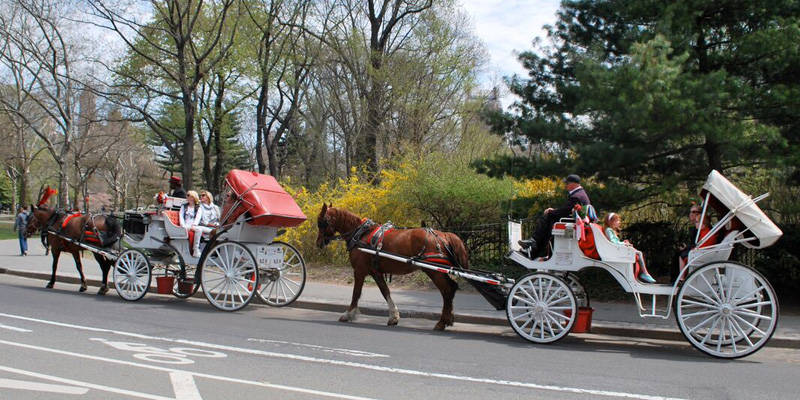central park horse carriage ride discounts. Black Bedroom Furniture Sets. Home Design Ideas