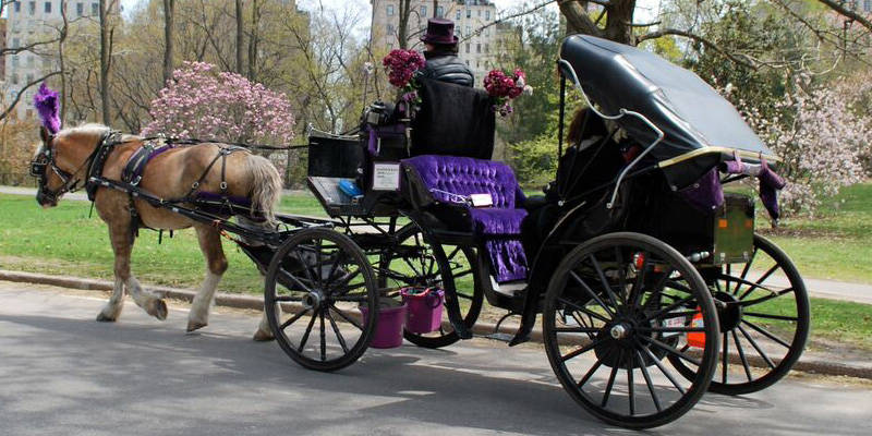 Central Park Horse and Carriage Ride 3