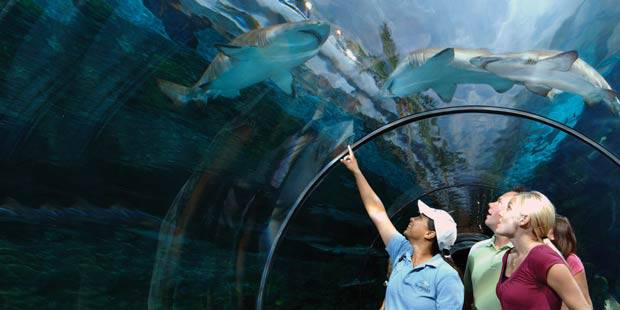 Seaworld Amp Busch Gardens Combo Tickets Save Up To 20 Off