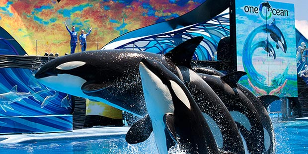 SeaWorld 1-Day Ticket