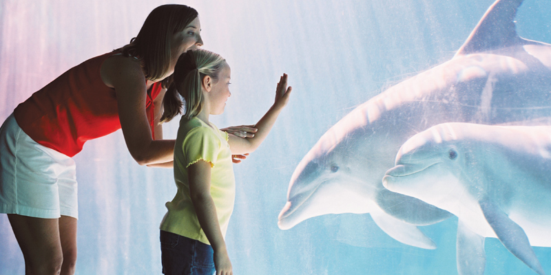 SeaWorld San Antonio 1