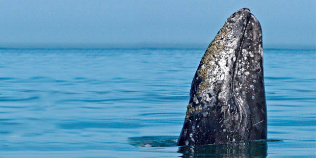 Flagship Cruises and Events Whale Watch 1