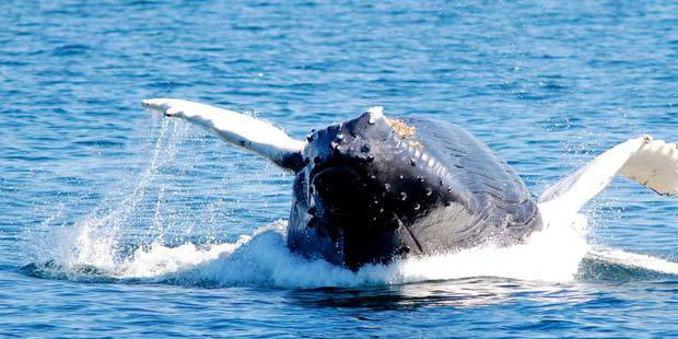 Flagship Cruises and Events Whale Watch 2