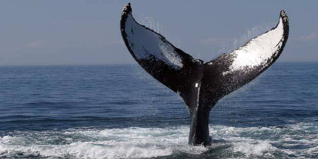 Flagship Cruises and Events Whale Watch 3