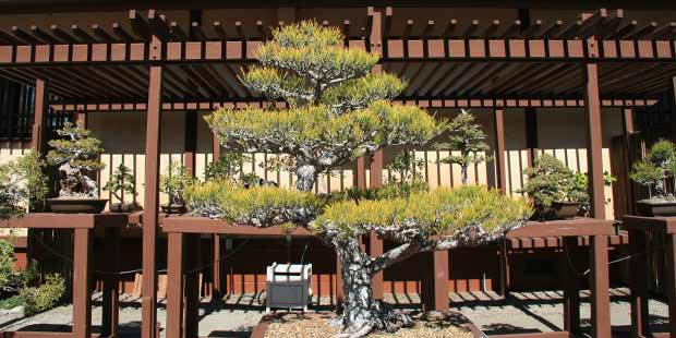 San Diego Japanese Friendship Garden Tickets Save Up To 55 Off