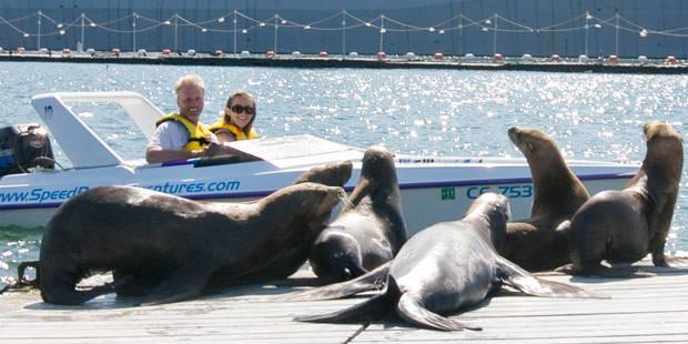 San Diego Speed Boat Tour Sparen Sie Bis Zu 55