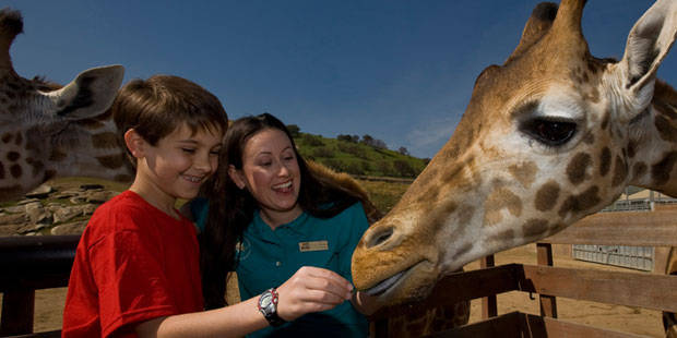 San Diego Zoo Safari Park Discounts Save Up To 20 Off
