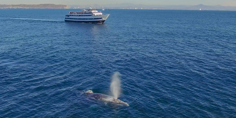 Whale Watching By Hornblower Cruises Winter Discounts