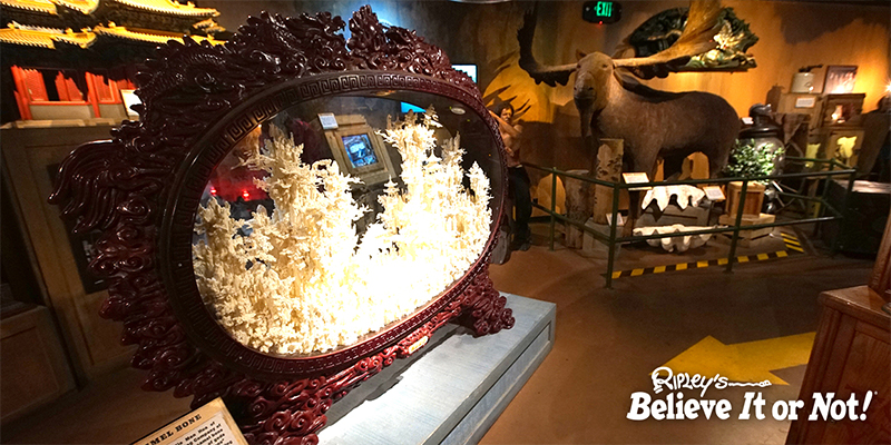 Ripley's Believe It Or Not 1