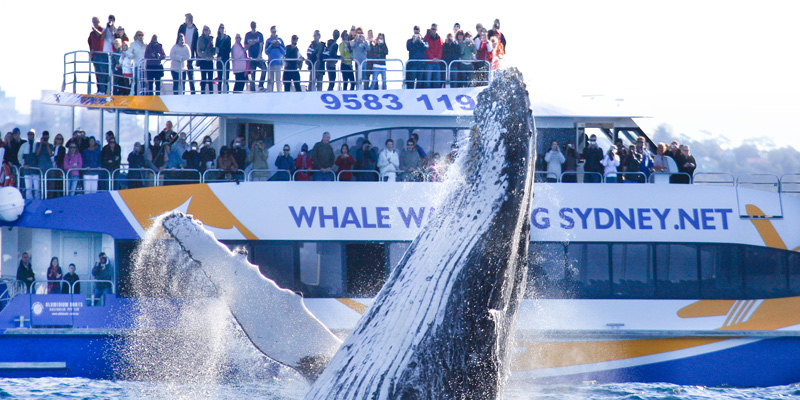 Whale Watching Adventure Cruise 1