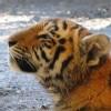 Bos_Att_Franklin_Park_Zoo