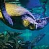 Bos_Att_New_England_Aquarium