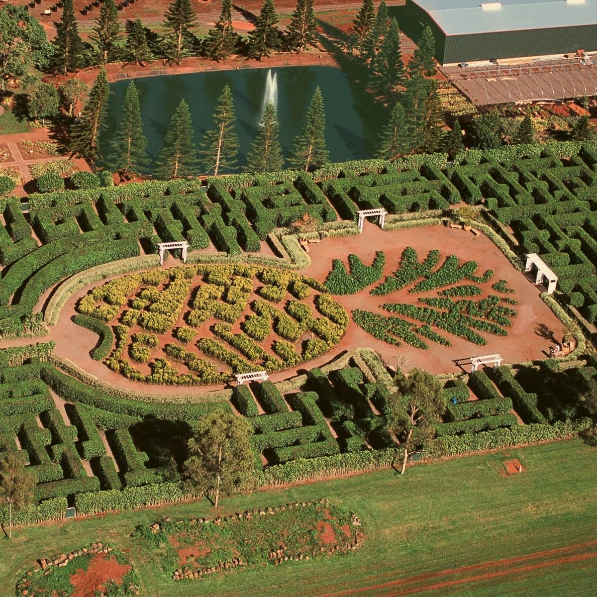 Dole Plantation: The Maze