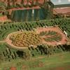 Hio_Att_Dole_Plantation_The_Maze