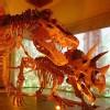 Lax_Att_LA_County_Natural_History_Museum