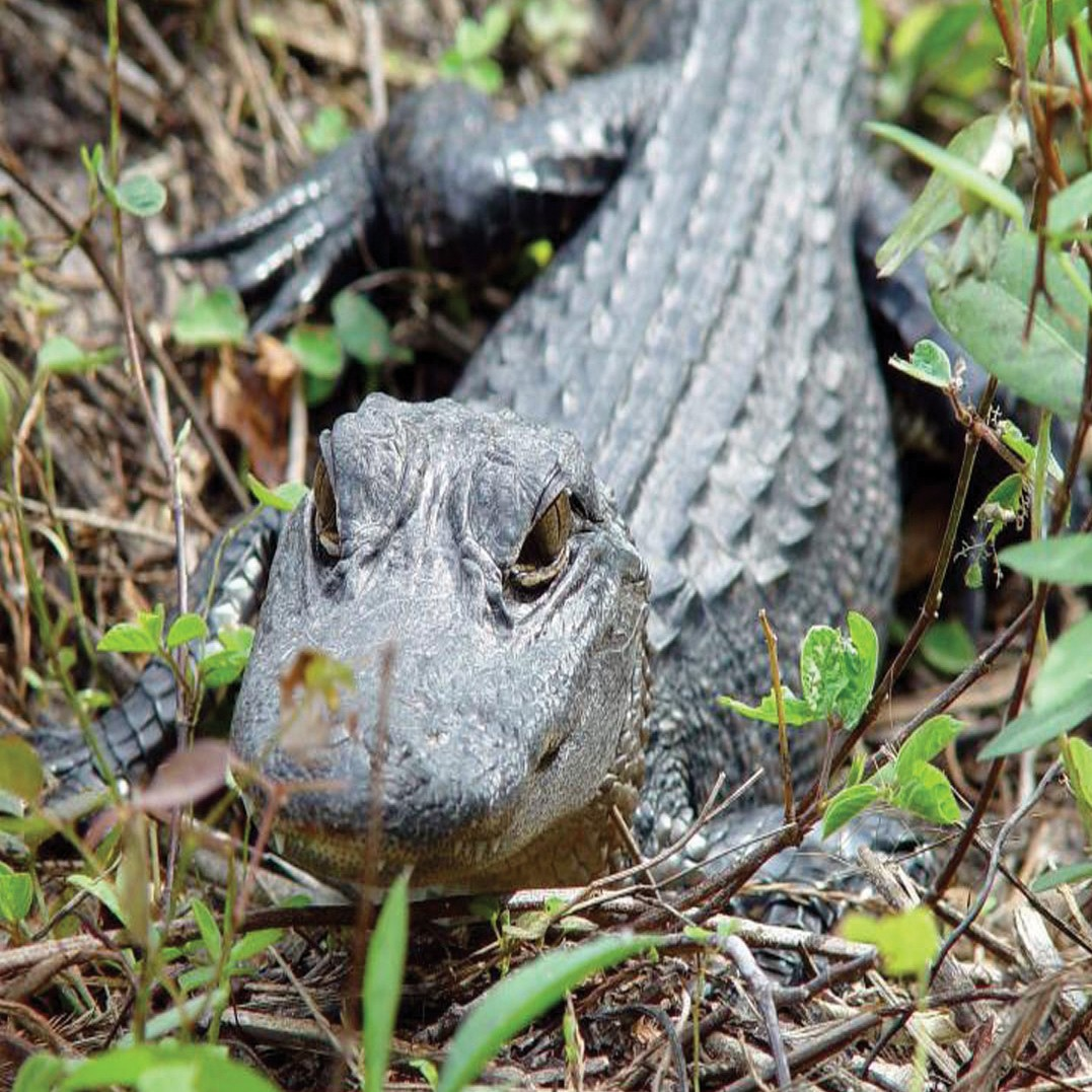 Everglades Tour from Miami tickets