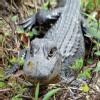 Mia_Att_Gray_Line_Everglades_Tour