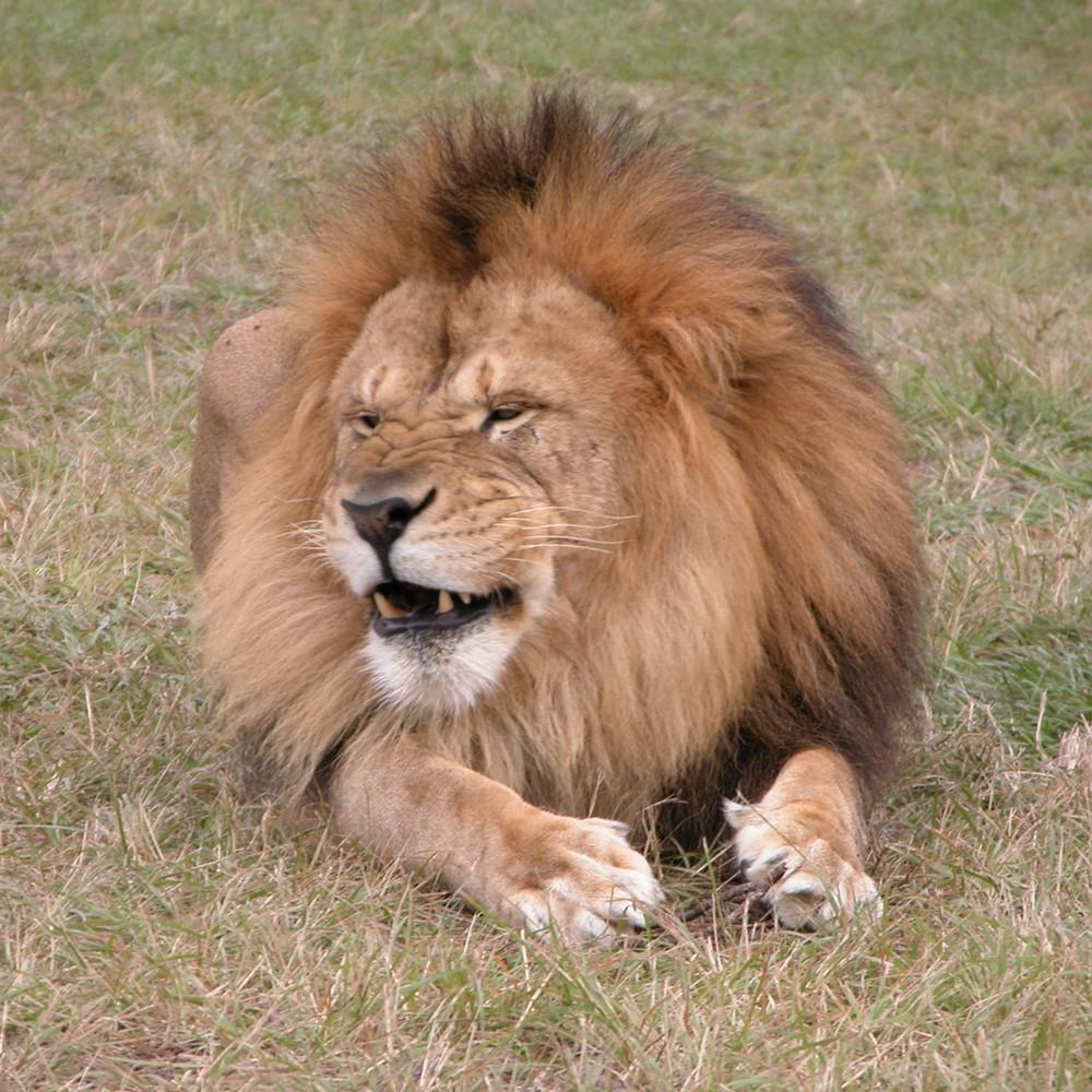 Orl_Att_Lion_Country_Safari