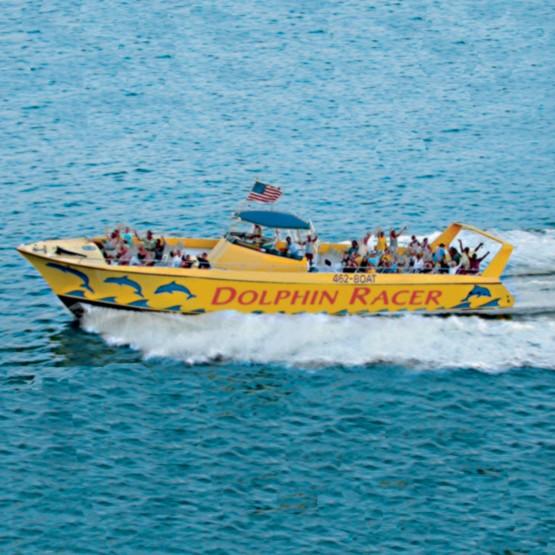 Dolphin Racer Speedboat Cruise
