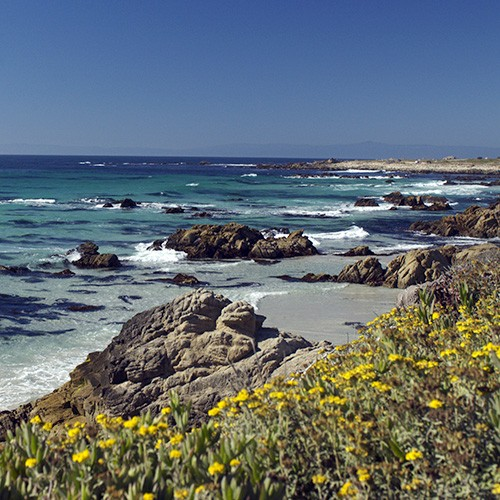 SF Sightseeing Full-day Monterey & Carmel Tour