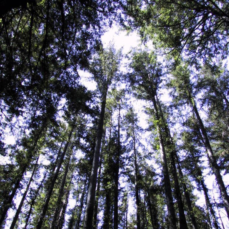 Muir Woods & Sausalito Tour