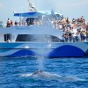 Lax_Att_Harbor_Cruise_or_Whale_Watch_San_Pedro
