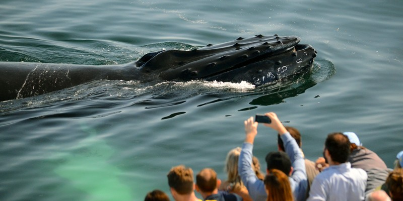 New England Aquarium Whale Watch presented by Boston Harbor Cruises