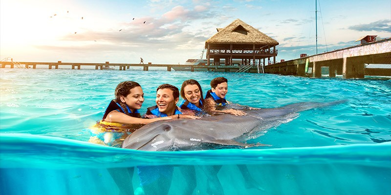 Swim with the Dolphins Adventure by Dolphin Discovery