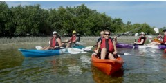 Excursion en kayak dans les mangroves d'Abu Dhabi