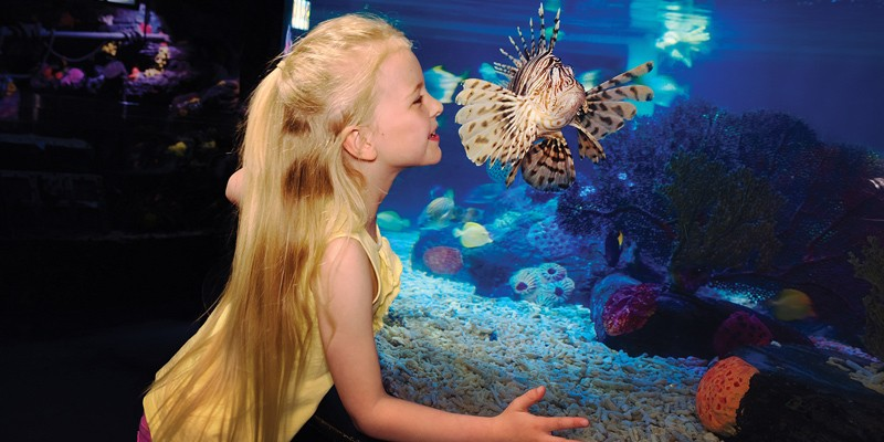 LEGOLAND/SEA LIFE Aquarium Hopper + 2nd Day FREE