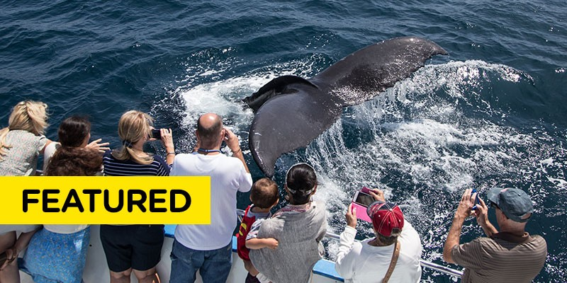 Whale Watching & Dolphin Cruises-Newport Landing