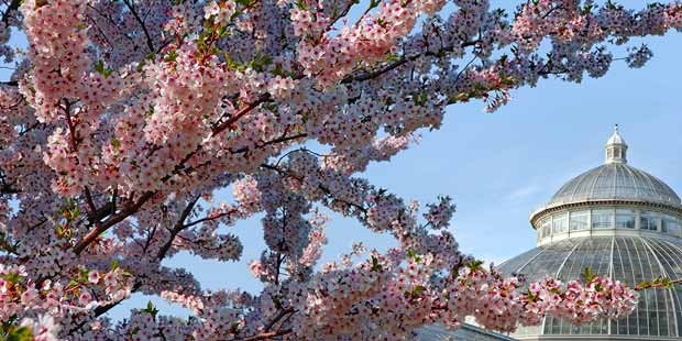 The New York Botanical Garden: All Day Garden Pass