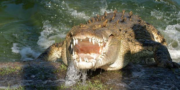 Gatorland: The Alligator Capitale del Mondo